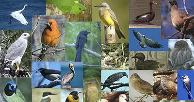 Local Attractions - Bird Watching